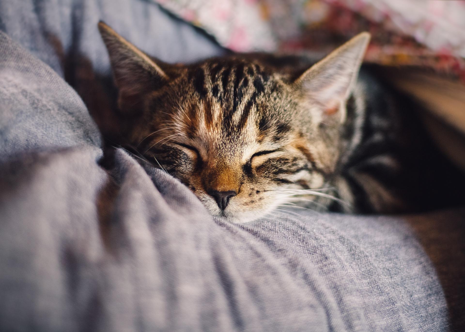 mascota gato ecología